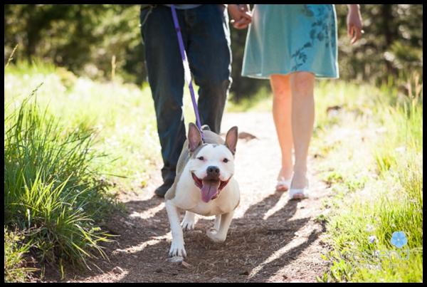 portrait, dog, walk